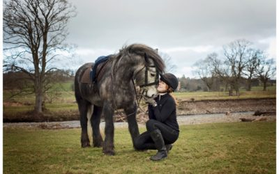 Photographic study of Lake District's own rare breed, the Fell Pony