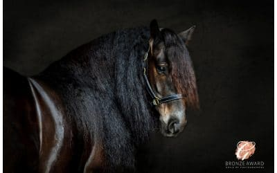Bronze Awarded by Guild of Photographers for Equestrian Portrait
