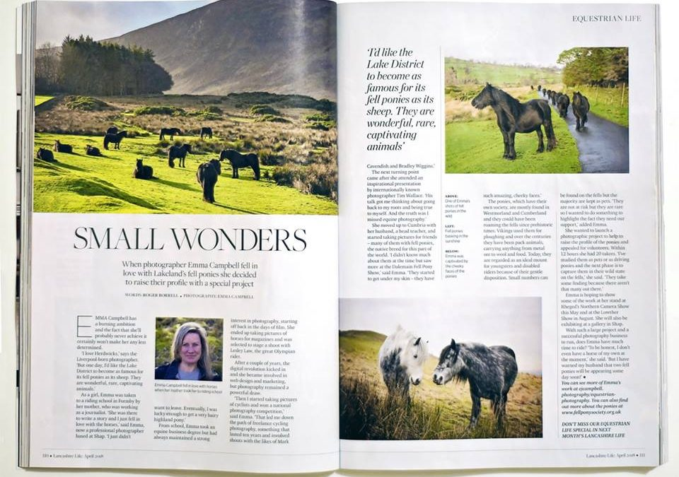 Lancashire Life – Fell Ponies double Page Spread