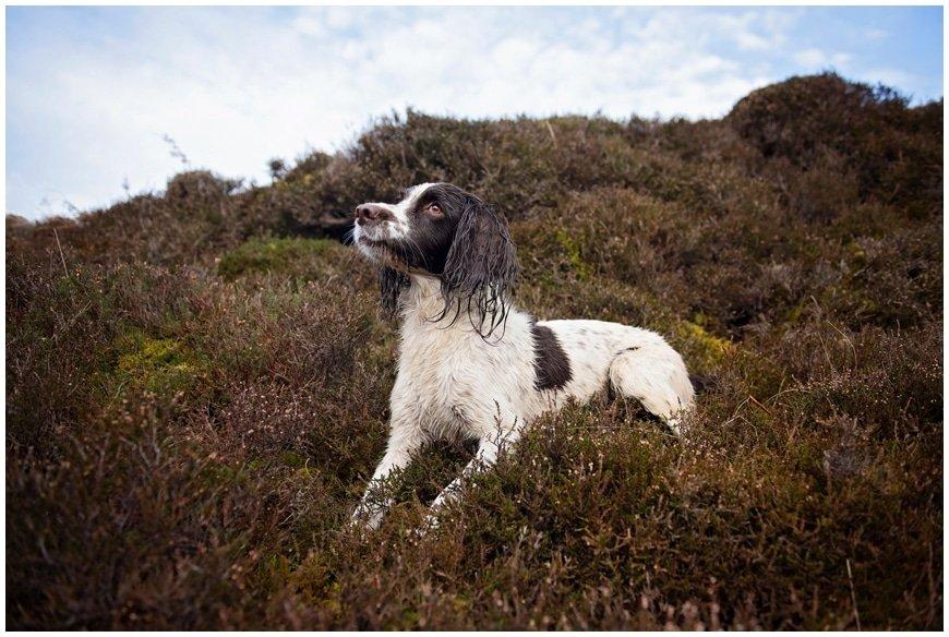 dog-photography-lake-district_0364