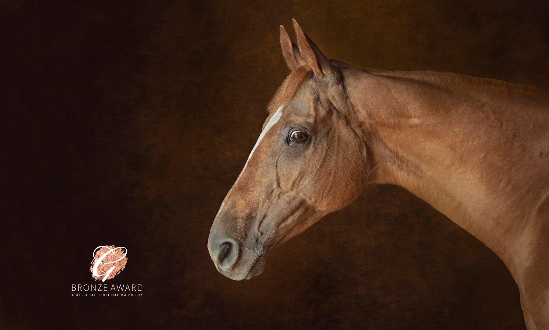 Equestrian photographs