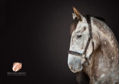 Fine-art photographs equestrian