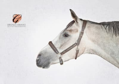 Fine-art equestrian photographs