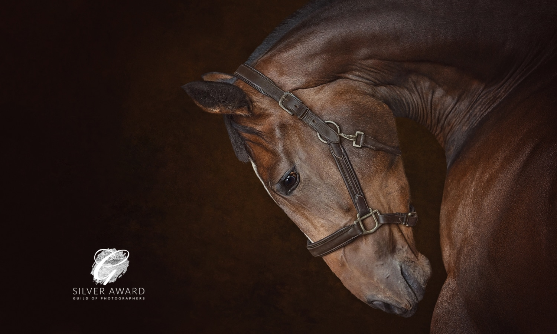 Fine-art equestrian photographer