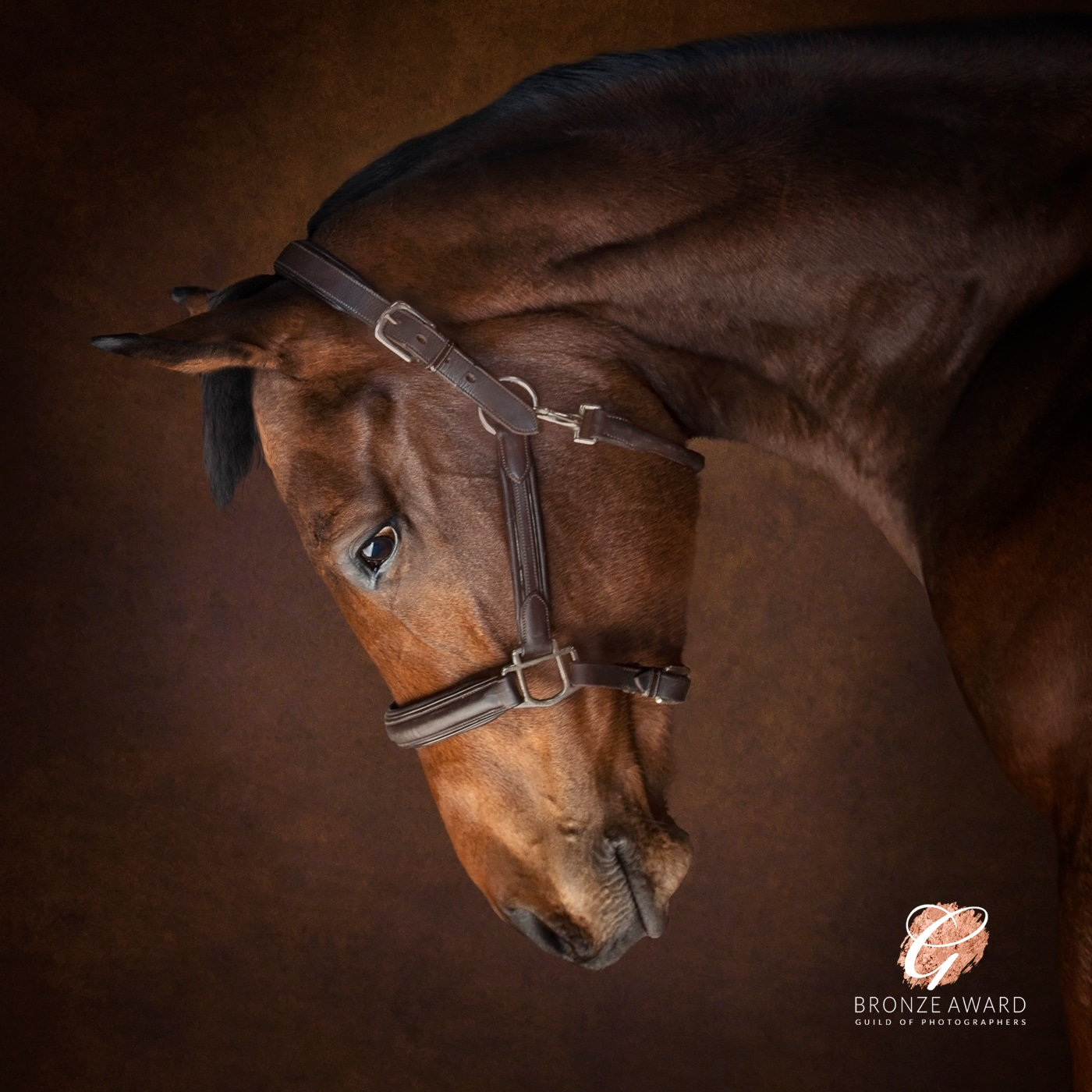 Photograph your horse