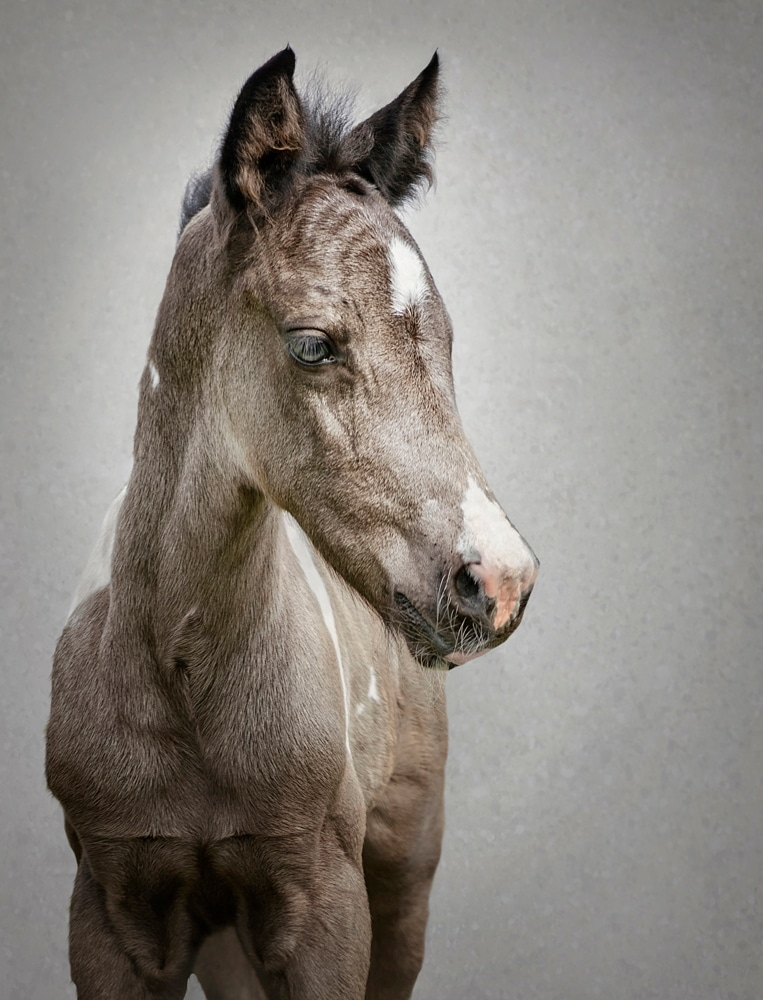 Foal fine-art photography
