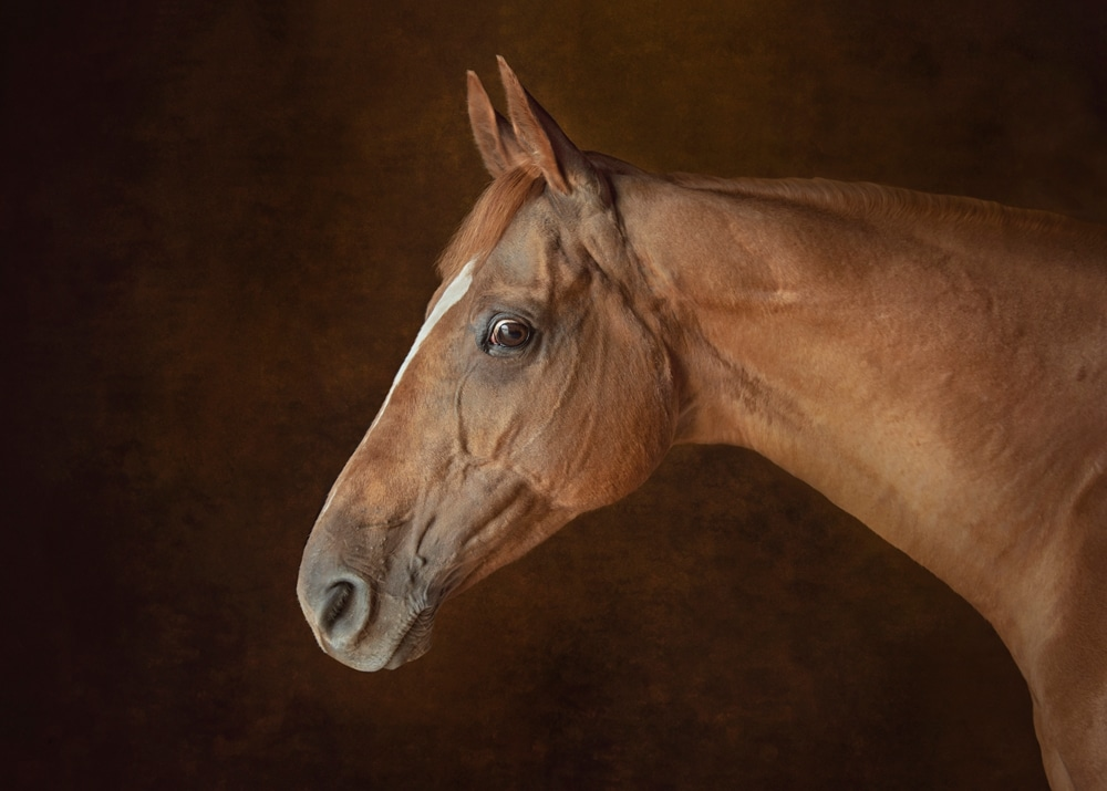 Horse photography awards