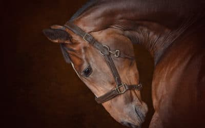 Equestrian Photograph shortlisted for National Competition