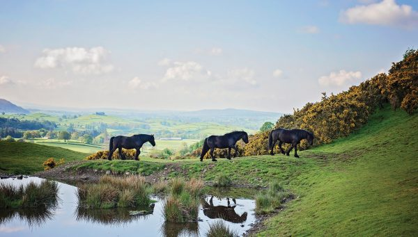 RDA Poster - Fell Ponies