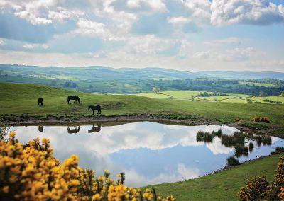 Lake District Fell ponies - greetings card