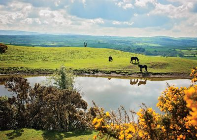 Conservation grazing - fell ponies greetings card