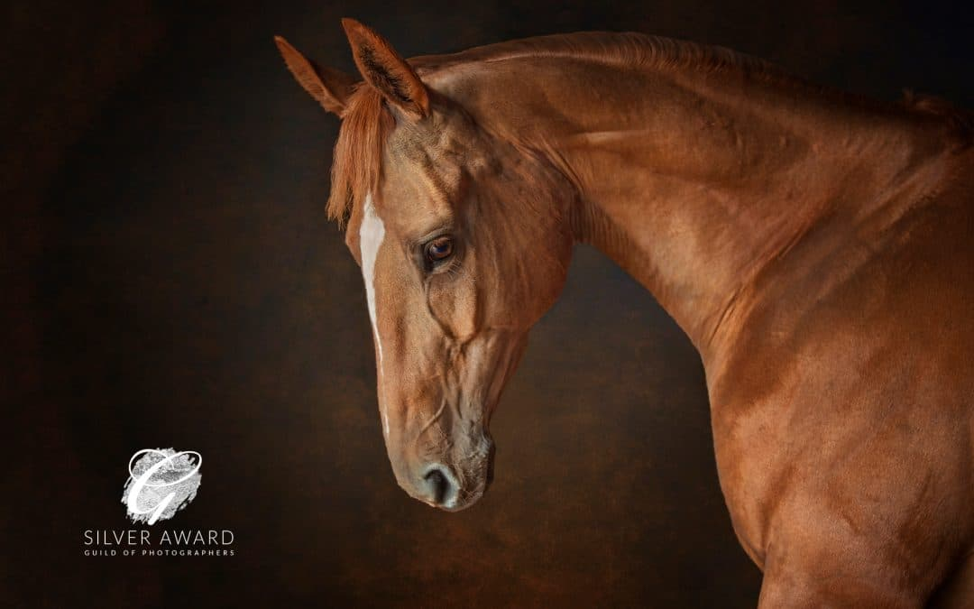 2019 Equestrian Photography Awards