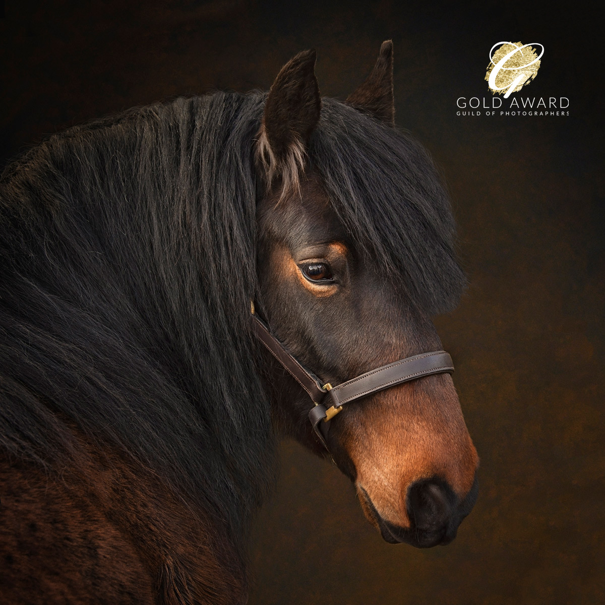 Gold awarded equestrian portrait, by the guild of photographers
