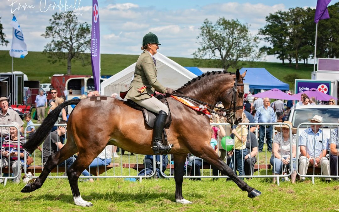 Skelton Show – Equestrian Classes