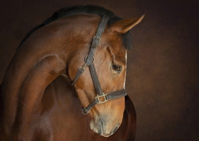 Equestrian and horse photography