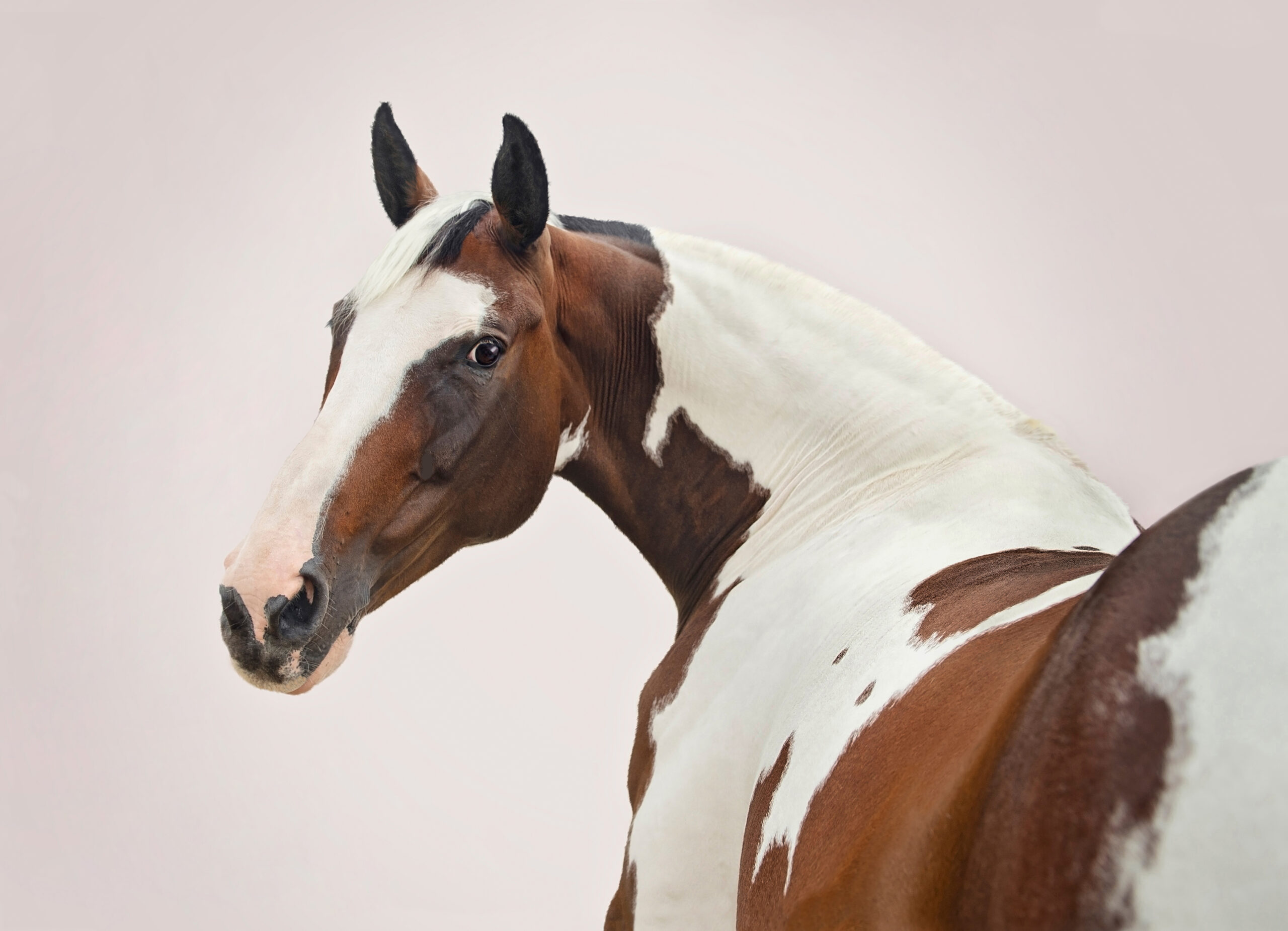 Emma Campbell equestrian photography