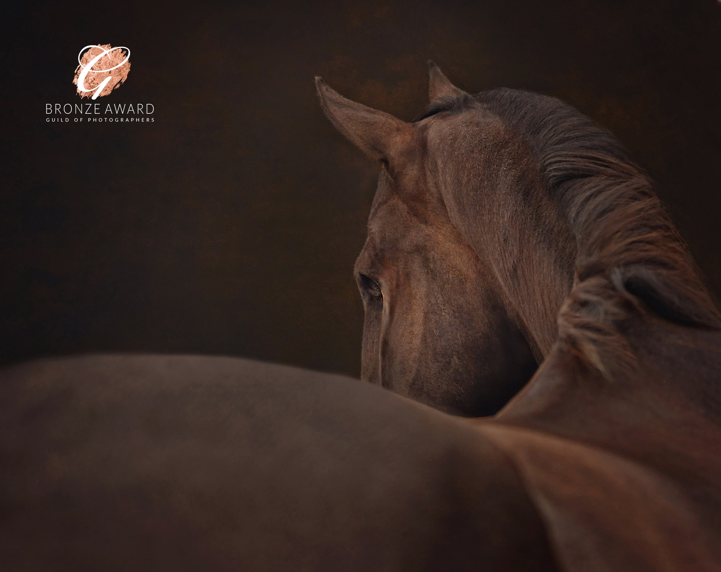 Thoroughbred photographer Emma Campbell
