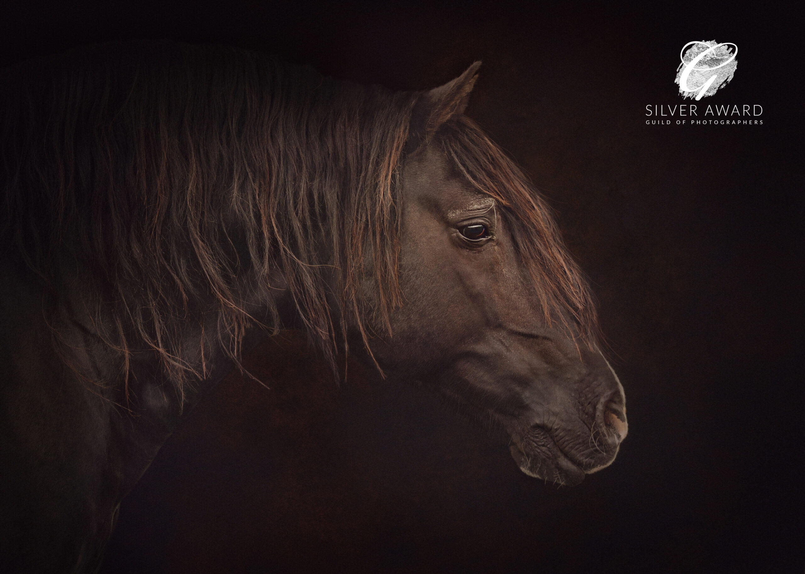 Welsh stallion, photographed by Emma Campbell