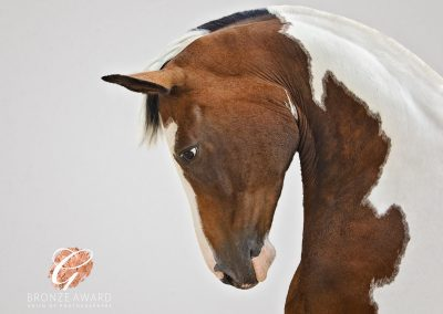 Sports horse photographed by Emma campbell