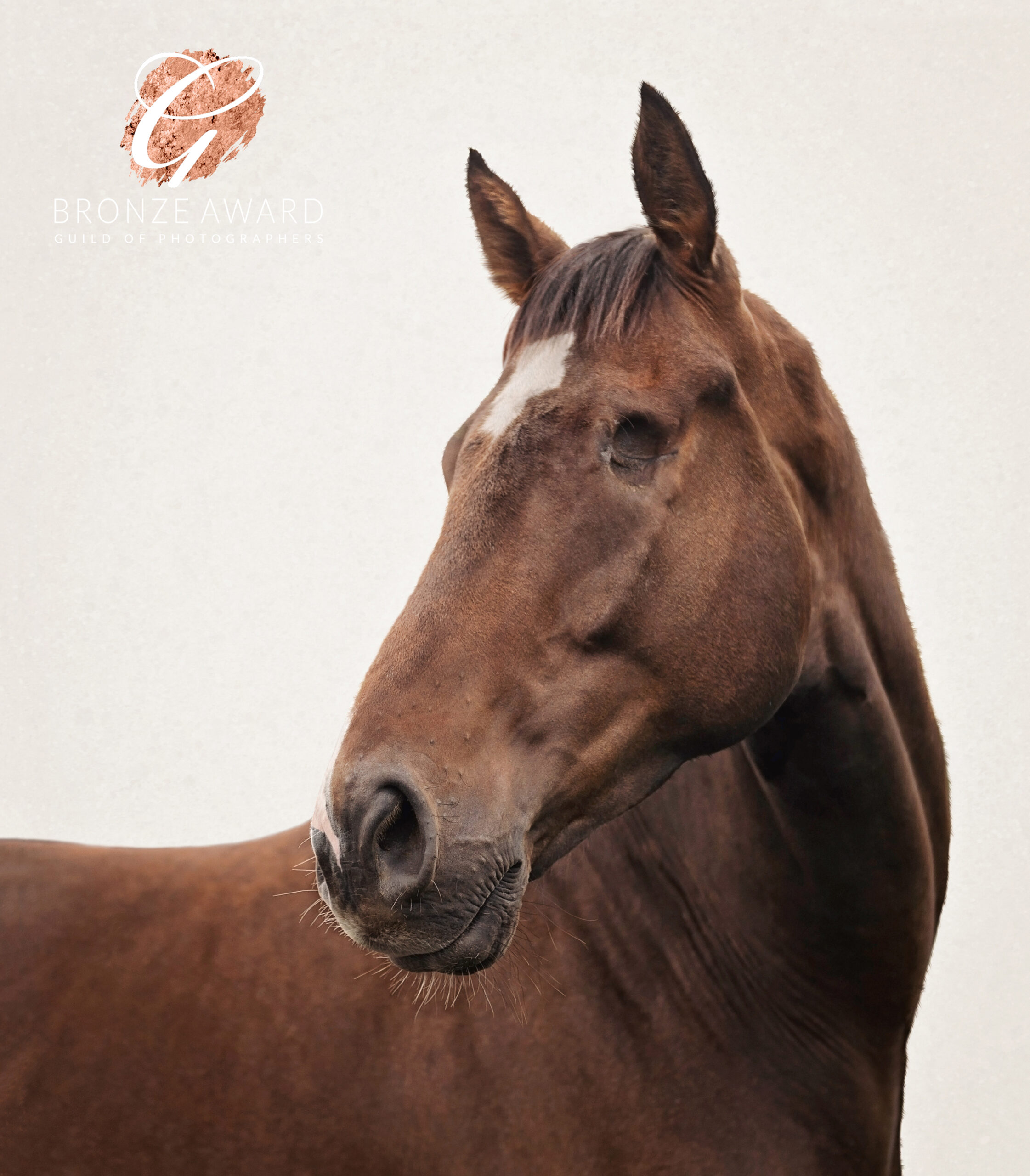 Young Racehorse, photographed by Emma Campbell