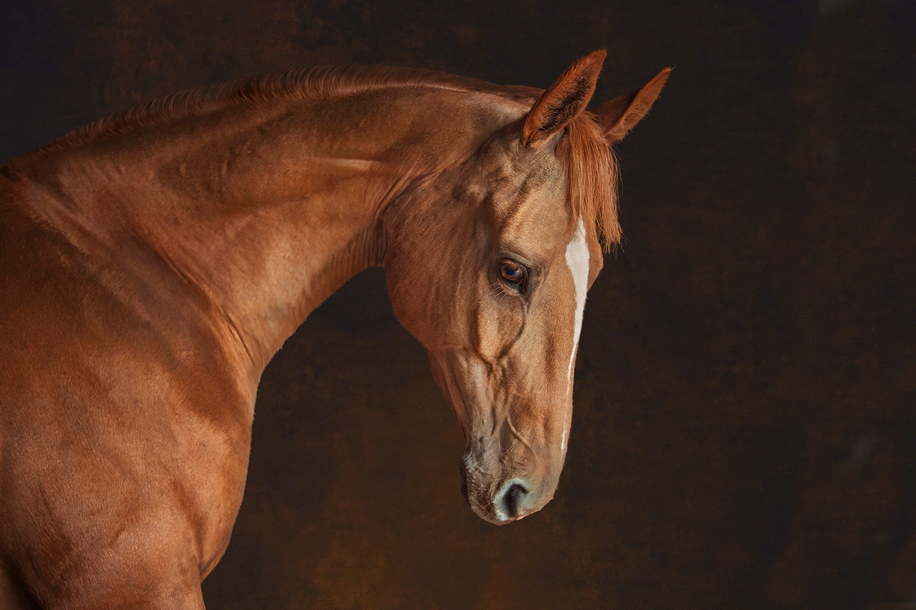 Horse portraiture by Emma Campbell