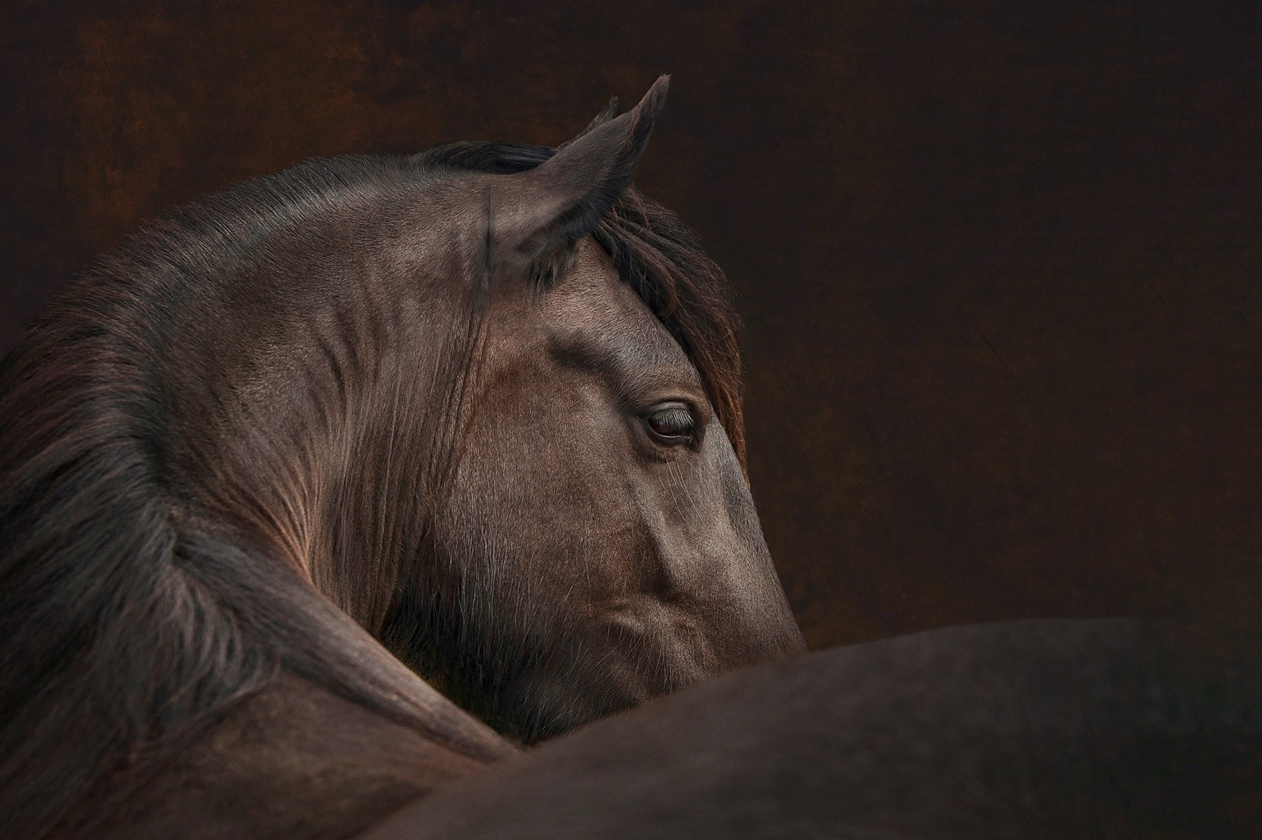 Horse photography by Emma Campbell