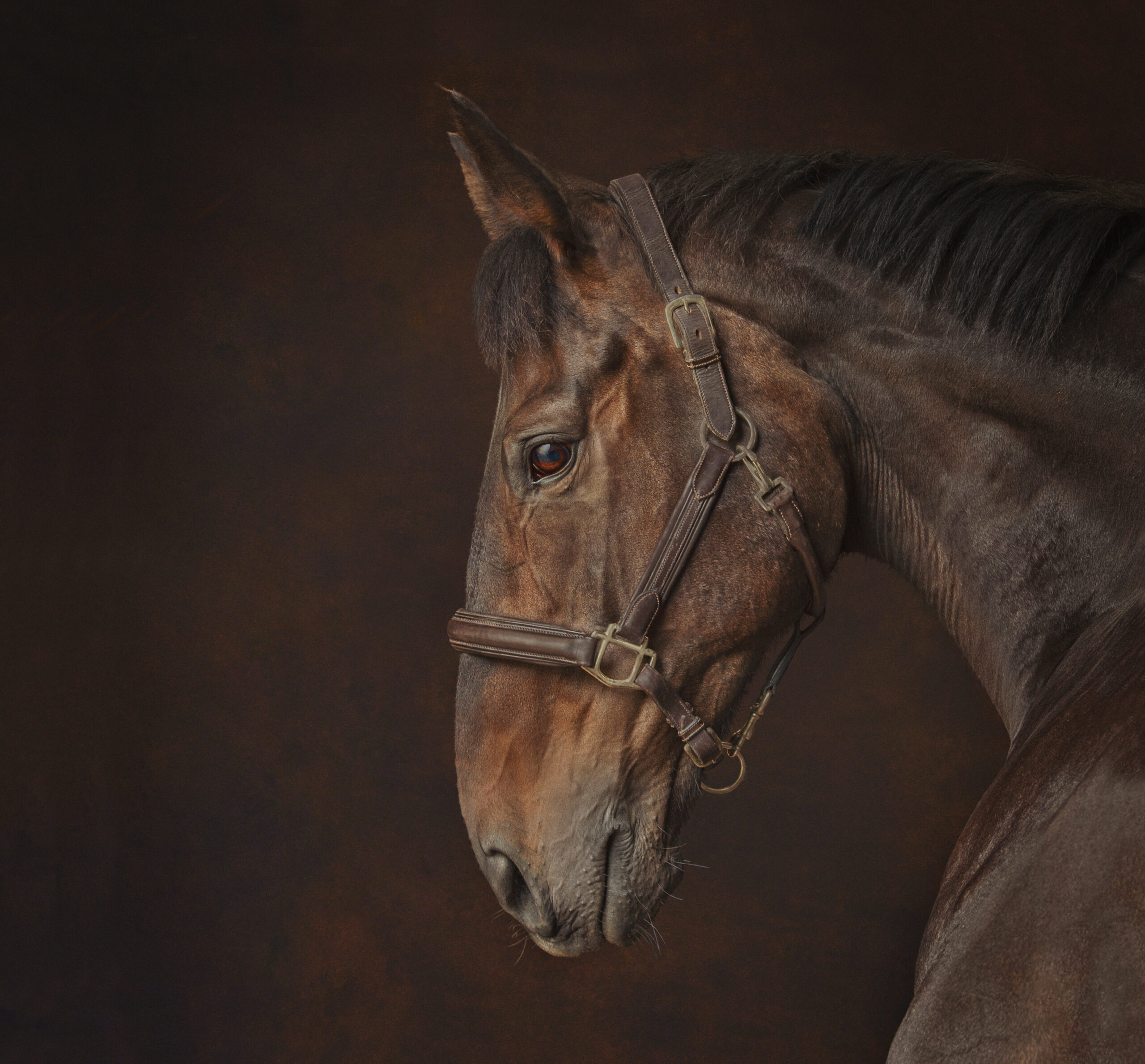 Award Winning Equine Image by Emma Campbell
