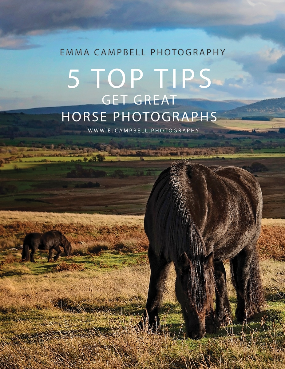 5 Top Tips horse Photography - FREE GUIDE